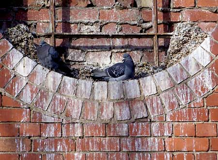 pigeon fouling